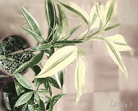植物🌴の画像(プリ画像)