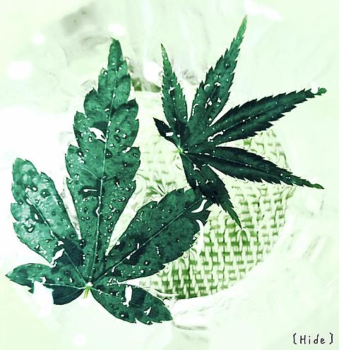 植物 青🍁の画像(プリ画像)