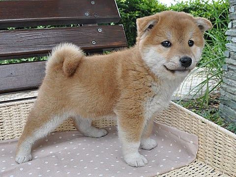 ばあちゃん家の犬の画像(プリ画像)