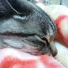 猫😺 プリ画像