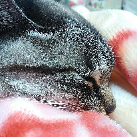 猫😺の画像(プリ画像)