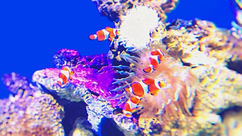 魚の画像(プリ画像)