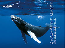 whale52の画像(#52ヘルツのクジラに関連した画像)