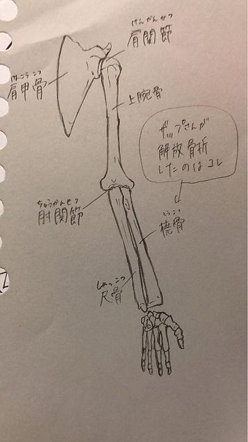 骨格 模写の画像(プリ画像)