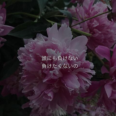 2018/08/17の画像(プリ画像)