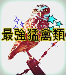 フクロウ!の画像(プリ画像)