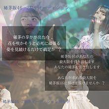 稀茅坂46  2期生オーディションの画像(オーディションに関連した画像)