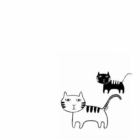 白黒猫の画像 プリ画像
