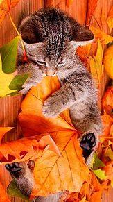 紅葉と子猫🐱の画像(プリ画像)