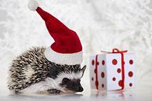 クリスマスのハリネズミの画像(かわいい ハリネズミに関連した画像)