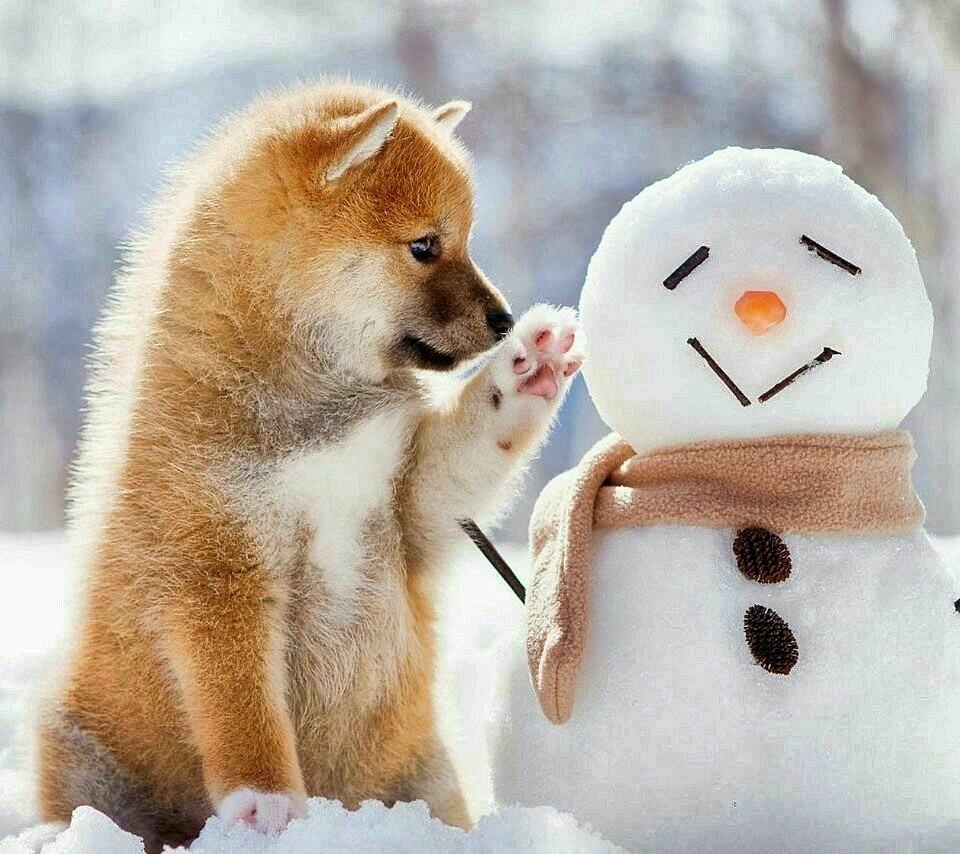 雪だるまとかわいい子犬