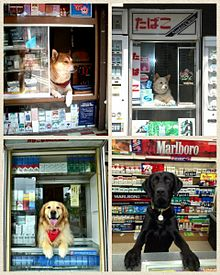 たばこ屋の看板犬の画像(たばこに関連した画像)