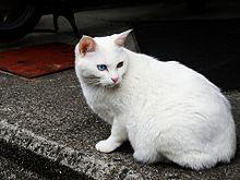 白猫~オッドアイの画像(白猫 オッドアイに関連した画像)