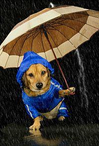梅雨時の お散歩の画像(梅雨時に関連した画像)