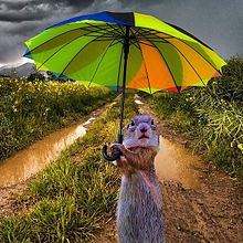 傘さすプレリードッグの画像(梅雨時に関連した画像)