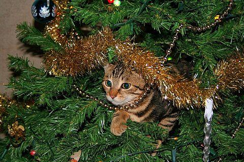 クリスマスの子猫の画像(プリ画像)