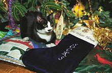 クリスマスの猫の画像(靴下に関連した画像)