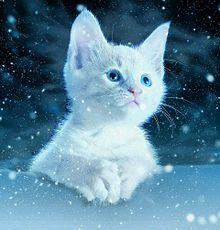 イラスト 子猫の画像72点完全無料画像検索のプリ画像bygmo