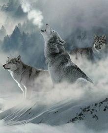 冬のオオカミ🐺の画像(遠吠えに関連した画像)