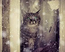 降る雪を眺める猫の画像(眺めるに関連した画像)