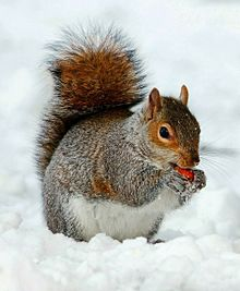 冬のリスさん🐿️の画像(動物/野生に関連した画像)