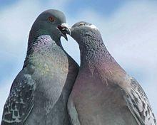 ハトのカップル プリ画像