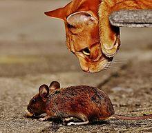 リアル  トムとジェリーの画像(猫に関連した画像)