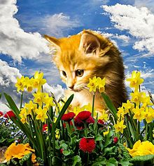 春の花と子猫 プリ画像