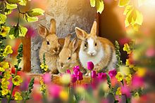 チューリップとウサギさん🐇の画像(ウサギに関連した画像)