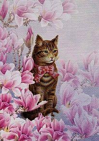 木蓮に猫 (イラスト) プリ画像
