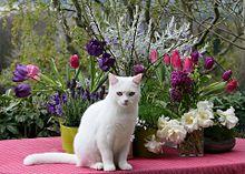 花と白猫の画像(猫に関連した画像)