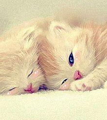 イラスト 子猫の画像70点 完全無料画像検索のプリ画像 Bygmo