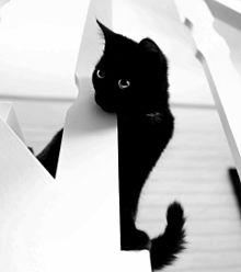 白と黒の画像(コントラストに関連した画像)