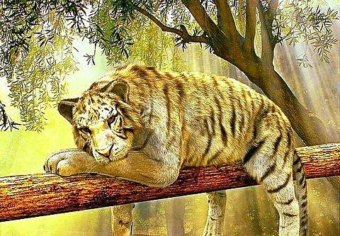 タイガー🐅 #動物#トラ#寅#虎#イラストの画像(プリ画像)