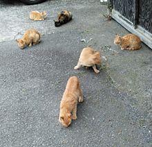 猫の集会に遭遇 #実写の画像(野良に関連した画像)