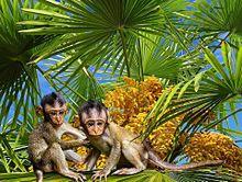 南の島のお猿さん🐒の画像(南国に関連した画像)