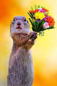 プレリードッグから花束💐の画像(動物に関連した画像)