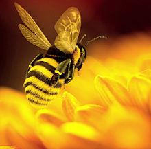 花にミツバチ🐝の画像(ハチに関連した画像)