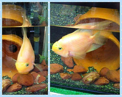 動物園の黄色い魚 #実写の画像 プリ画像
