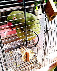 動物園のワカケホンセイインコ #実写の画像(動物に関連した画像)