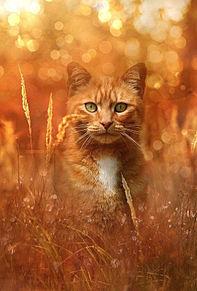 茶トラ猫さん🐈️の画像(野良に関連した画像)