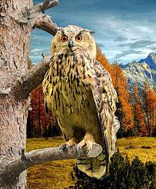 秋の森のフクロウさん🦉 プリ画像