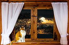 窓辺の猫様🐈️ プリ画像