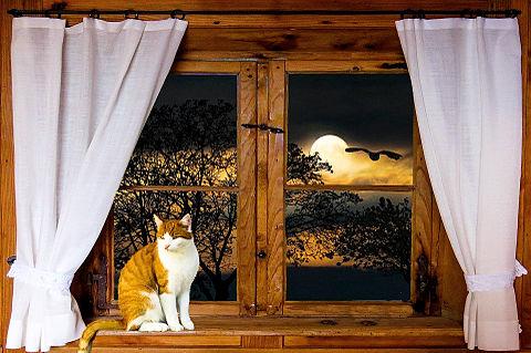 窓辺の猫様🐈️の画像 プリ画像