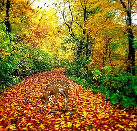 秋の森の鹿🦌の画像(プリ画像)