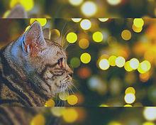 イルミネーションと猫🐈️ プリ画像
