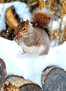 冬のリスさん🐿️の画像(自然に関連した画像)