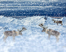 トナカイの群れ🦌 プリ画像