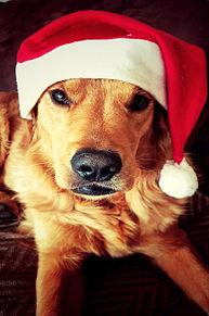 クリスマスのワンコ プリ画像