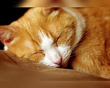 猫の日🐈️眠る茶白ネコさんの画像(猫の日に関連した画像)